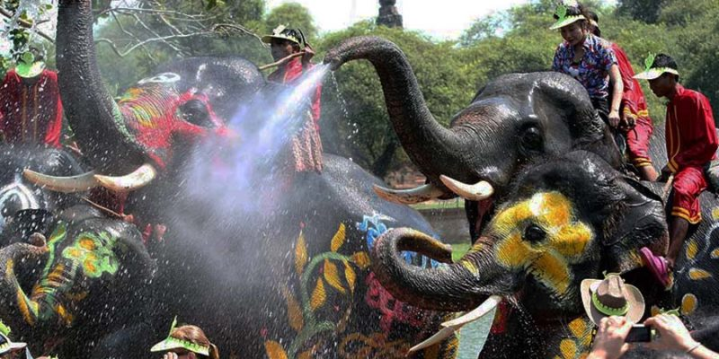 Elephant songkran in Ayutthaya